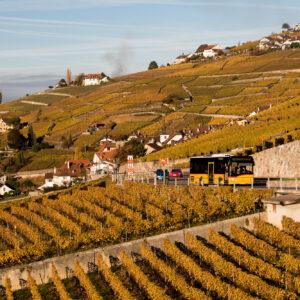In den goldenen Weinbergen des Lavaux (VD) unterwegs