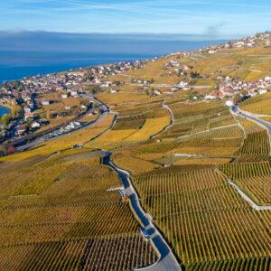 Die Weinterrassen des Lavaux in ihrer ganzen Pracht!