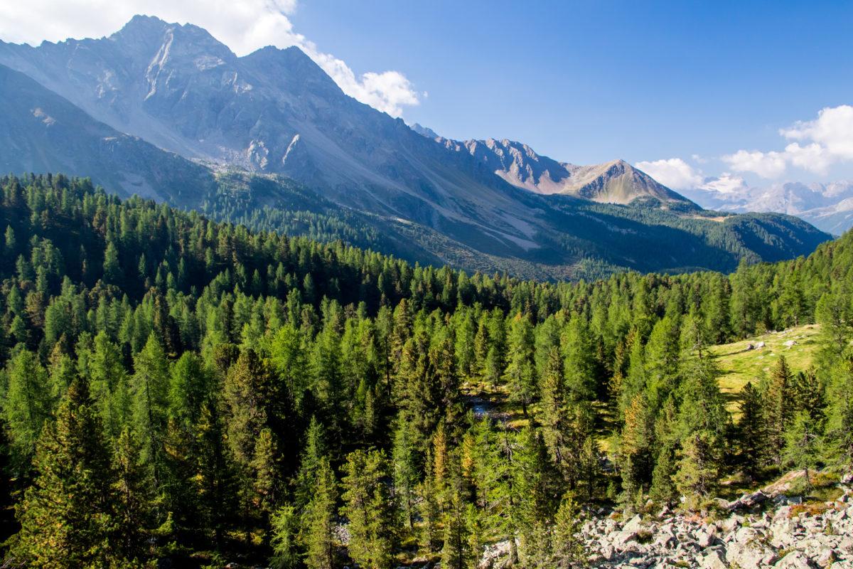 Fichtenwald, soweit das Auge reicht: Im Val da Camp unterwegs.