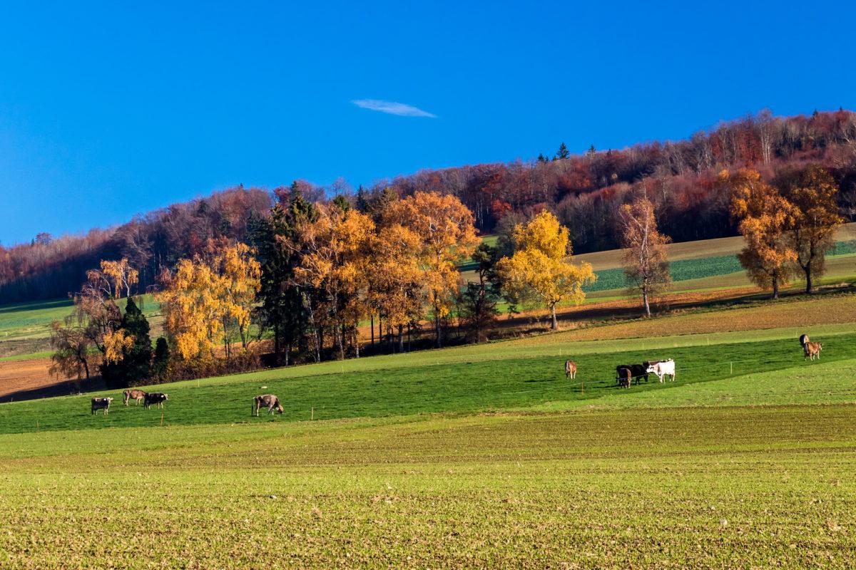 ...zeigen sich hangaufwärts die schönsten Herbstfarben!