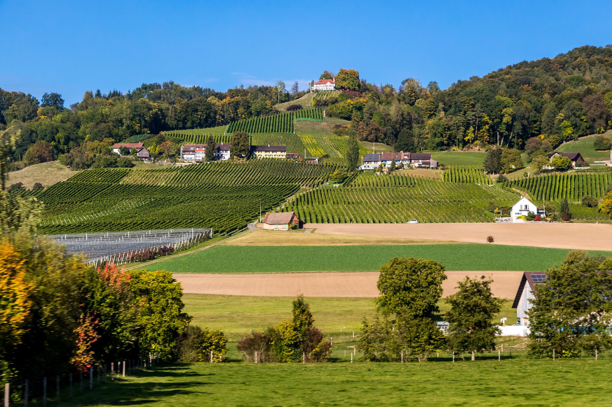 Blick auf die Rebhänge am Ottenberg, welche Weinfelden seinen Namen gegeben haben.