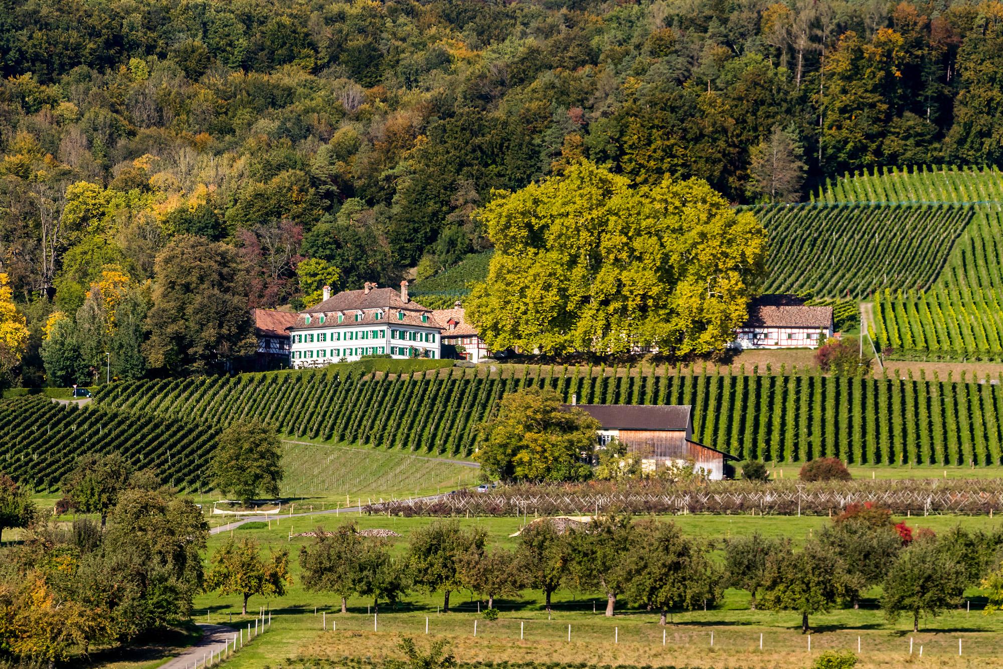 Schloss Bachtobel gleich nebenan: Ein ehemaliger Adelssitz aus dem 16. Jahrhundert mit eigenem Weingut.