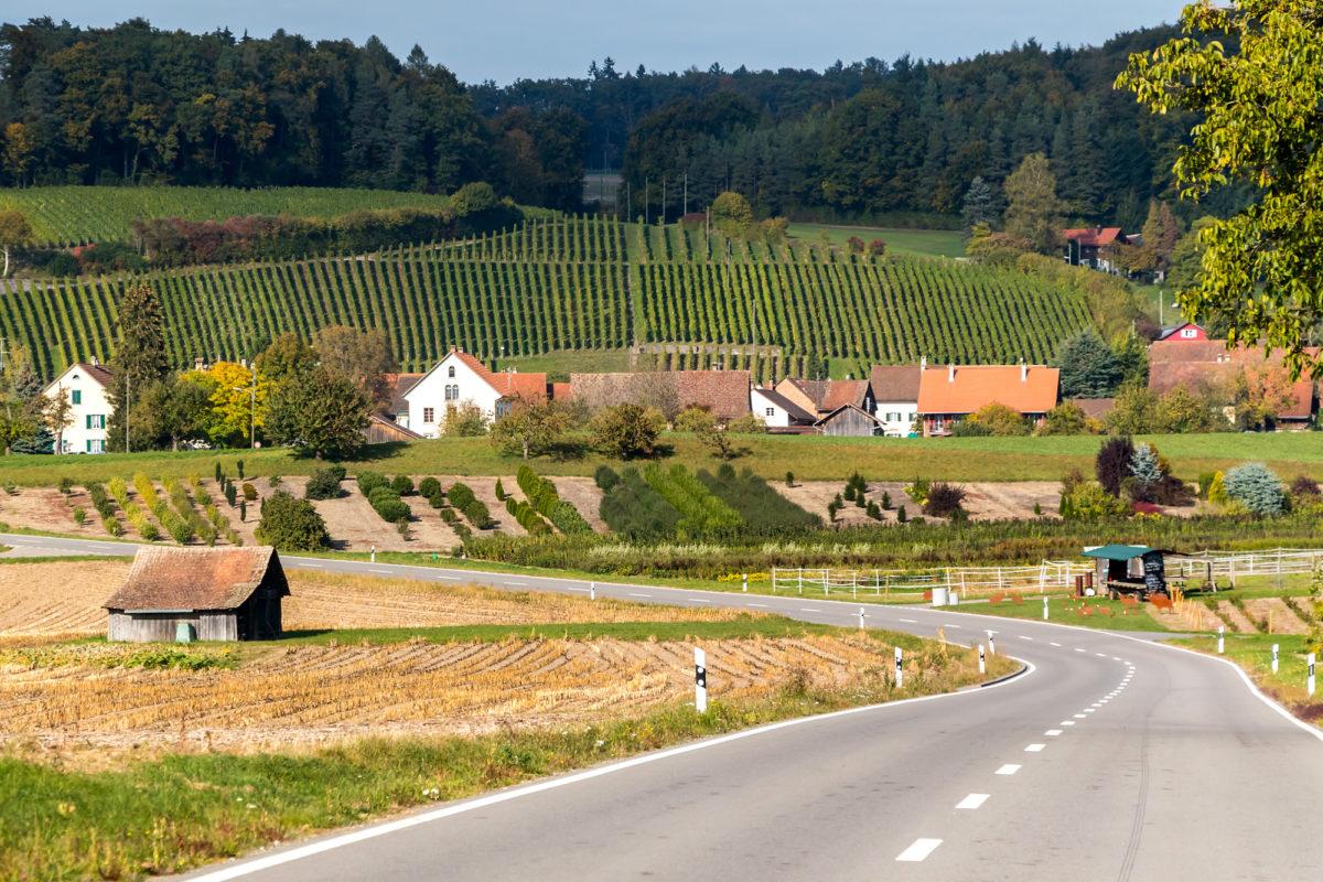 Noch einmal die Schönheiten des Züricher Weinlandes geniessen...